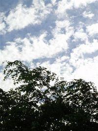 2009_83_342