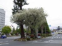 20105_133_2