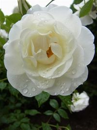 20116_061_2