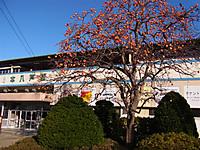 201111_039